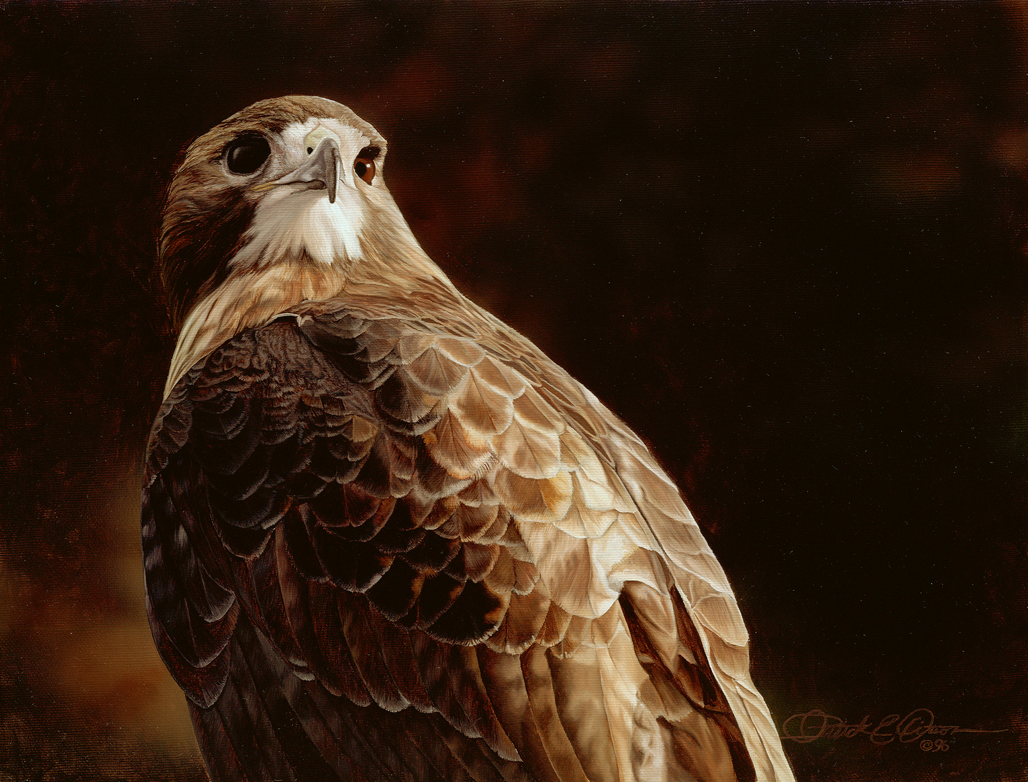 """""""Evening Hunt, Red-tailed Hawk"""", 22"""" x 26"""", oil on canvas"""